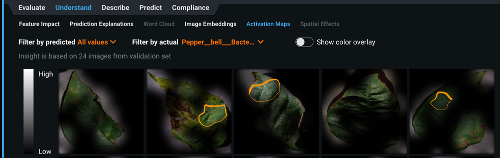 Figure 13. Activation maps of diseased bell pepper leaves showing the model paying attention to the healthy parts of some of these leaves while ignoring the diseased parts